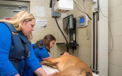 West_Hills_Animal_Hospital-7808